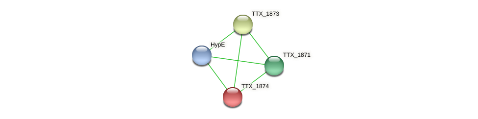 TTX_1874 protein (Thermoproteus tenax) - STRING interaction network