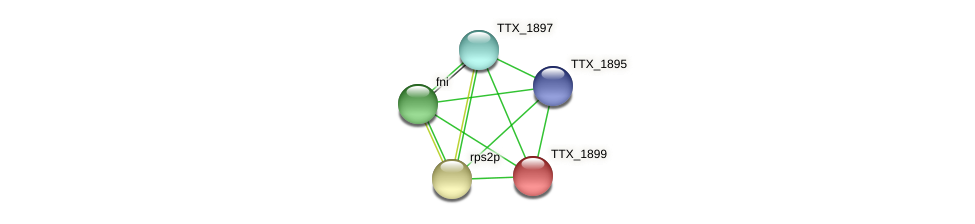 TTX_1899 protein (Thermoproteus tenax) - STRING interaction network