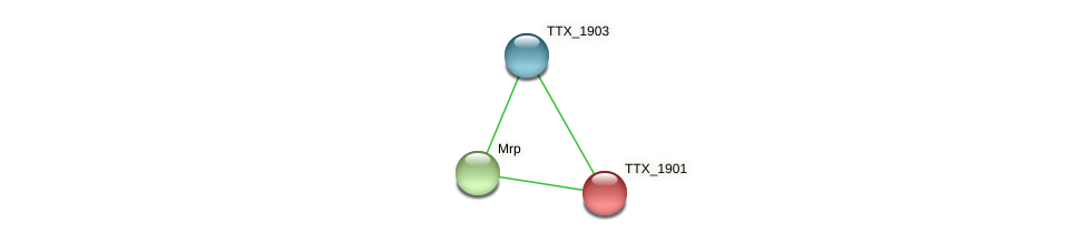 TTX_1901 protein (Thermoproteus tenax) - STRING interaction network