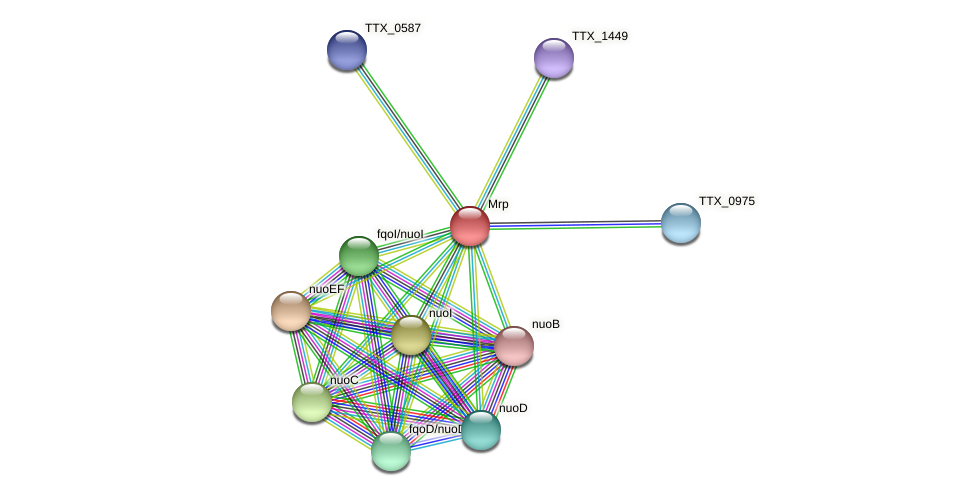 TTX_1902 protein (Thermoproteus tenax) - STRING interaction network