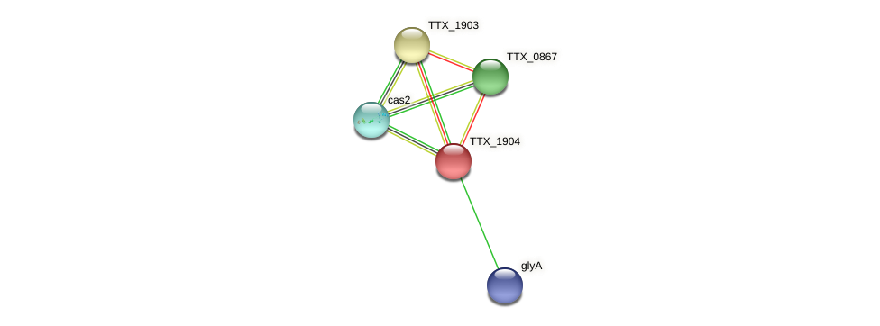 TTX_1904 protein (Thermoproteus tenax) - STRING interaction network