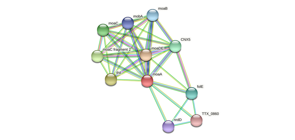 TTX_1912 protein (Thermoproteus tenax) - STRING interaction network