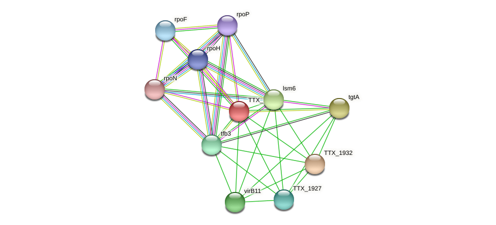 TTX_1930 protein (Thermoproteus tenax) - STRING interaction network