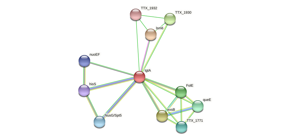 tgtA protein (Thermoproteus tenax) - STRING interaction network