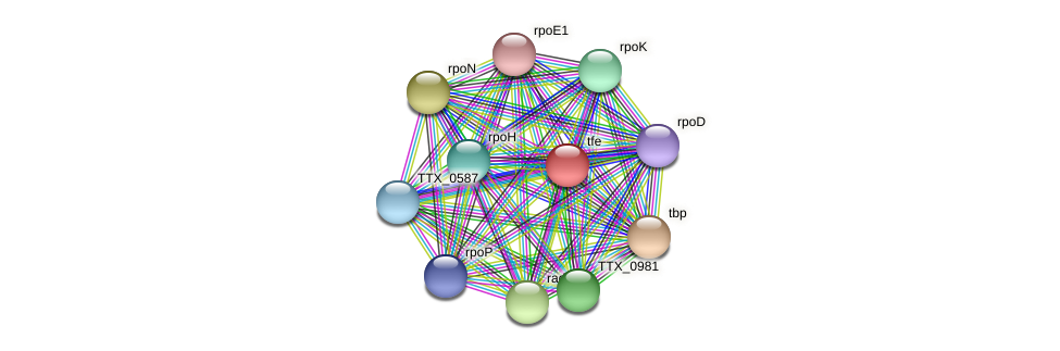 tfe protein (Thermoproteus tenax) - STRING interaction network