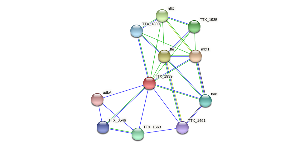 TTX_1939 protein (Thermoproteus tenax) - STRING interaction network