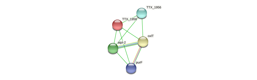 TTX_1958 protein (Thermoproteus tenax) - STRING interaction network