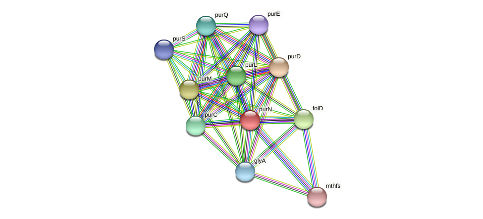 purN protein (Thermoproteus tenax) - STRING interaction network