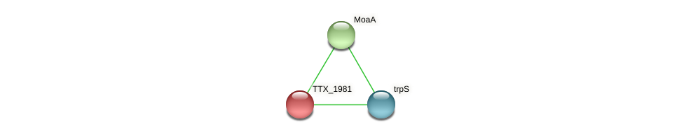 TTX_1981 protein (Thermoproteus tenax) - STRING interaction network