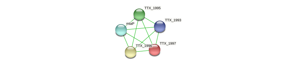 TTX_1997 protein (Thermoproteus tenax) - STRING interaction network