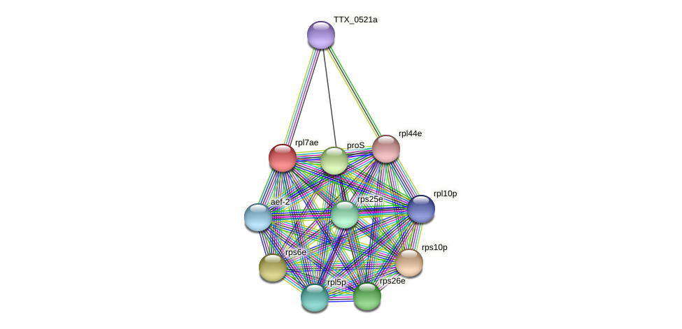 rpl7ae protein (Thermoproteus tenax) - STRING interaction network