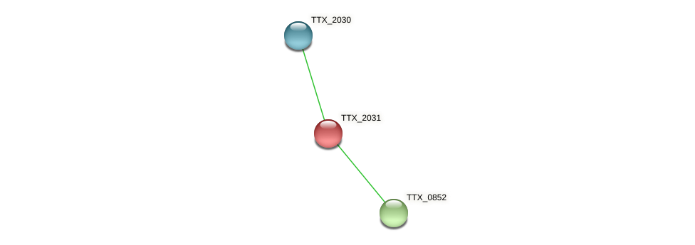 TTX_2031 protein (Thermoproteus tenax) - STRING interaction network
