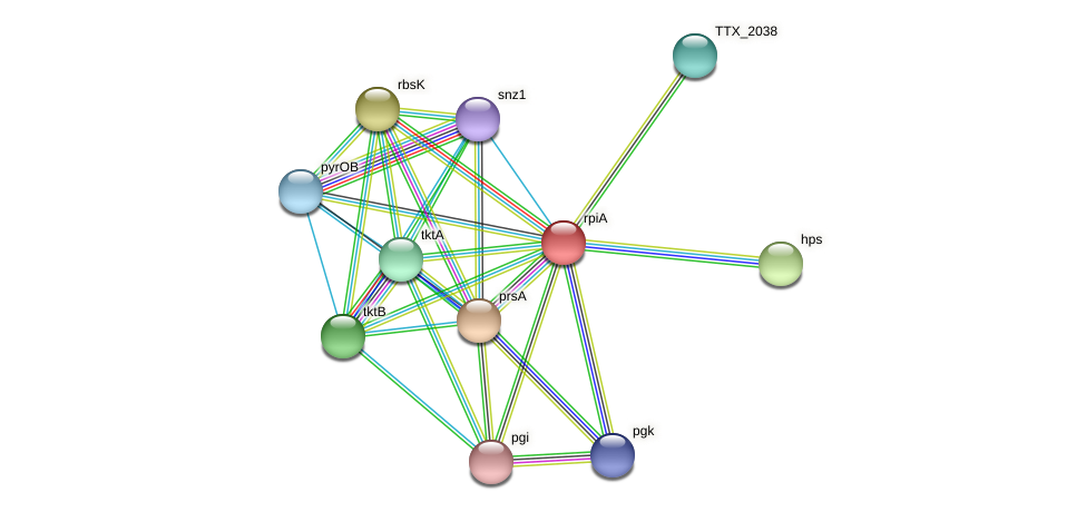 rpiA protein (Thermoproteus tenax) - STRING interaction network