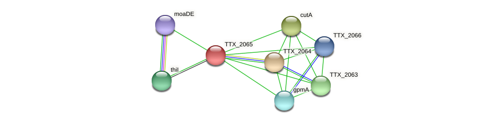 TTX_2065 protein (Thermoproteus tenax) - STRING interaction network