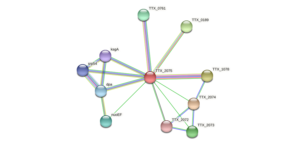 TTX_2075 protein (Thermoproteus tenax) - STRING interaction network