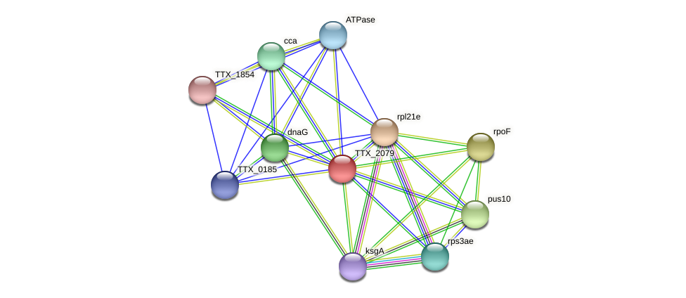 TTX_2079 protein (Thermoproteus tenax) - STRING interaction network