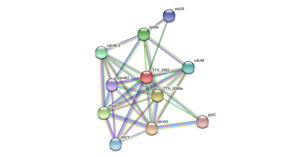TTX_2082 protein (Thermoproteus tenax) - STRING interaction network