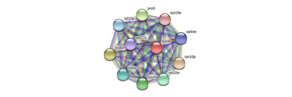 rps4e protein (Thermoproteus tenax) - STRING interaction network