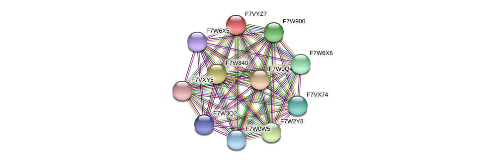 SMAC_04418 protein (Sordaria macrospora) - STRING interaction network