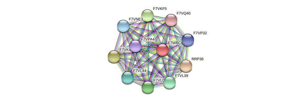 SMAC_09134 protein (Sordaria macrospora) - STRING interaction network