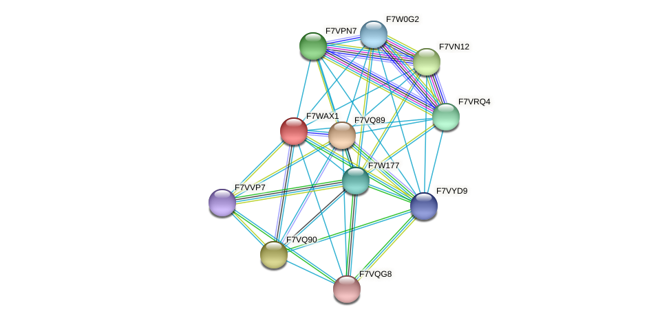 SMAC_08825 protein (Sordaria macrospora) - STRING interaction network