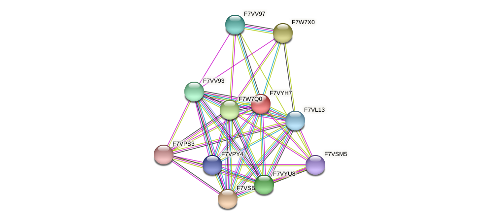 SMAC_06485 protein (Sordaria macrospora) - STRING interaction network