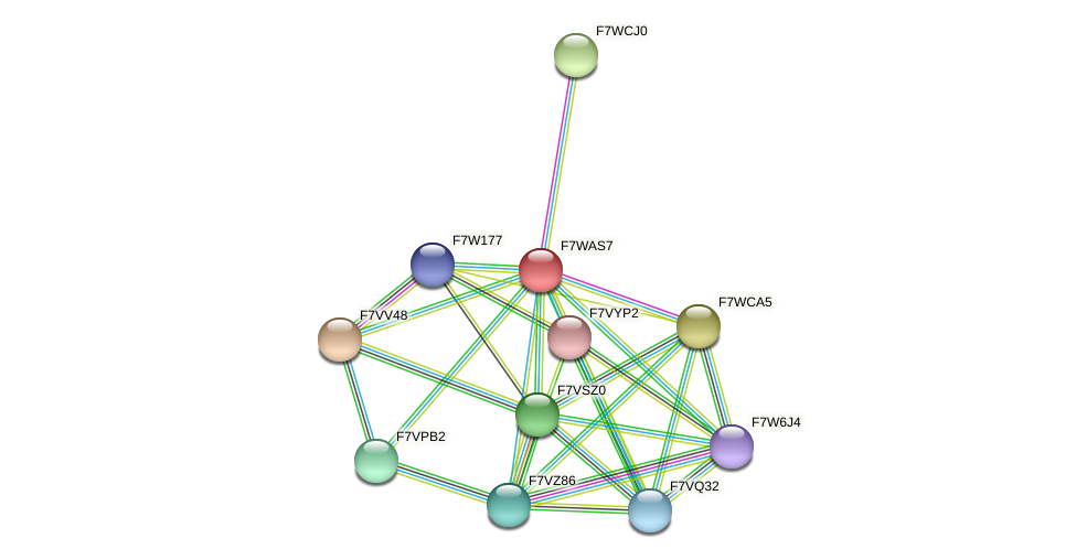 SMAC_08755 protein (Sordaria macrospora) - STRING interaction network