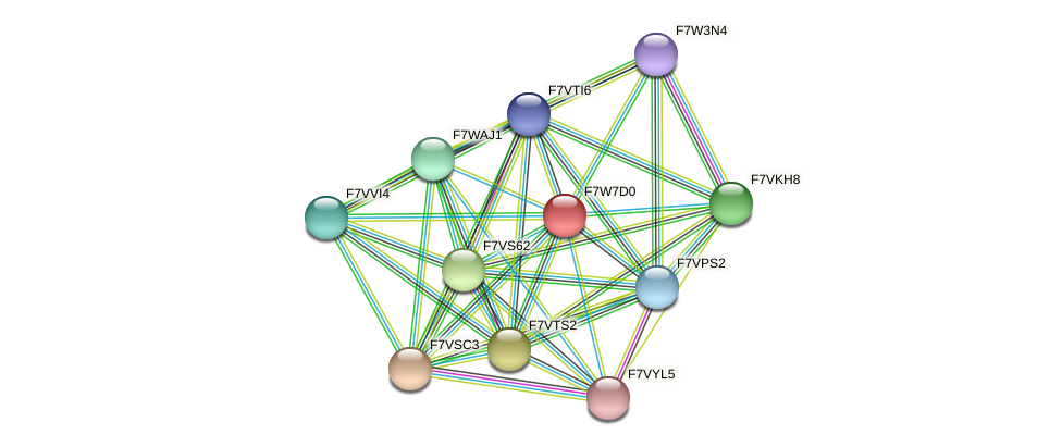 SMAC_06919 protein (Sordaria macrospora) - STRING interaction network