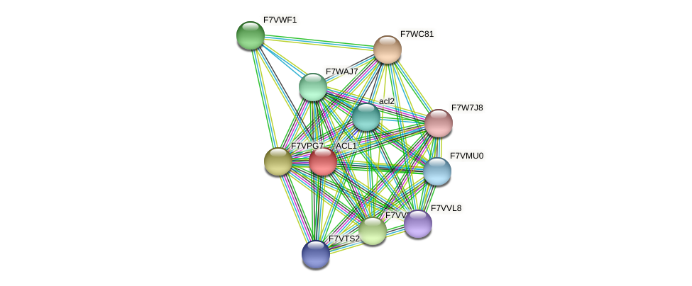 ACL1 protein (Sordaria macrospora) - STRING interaction network