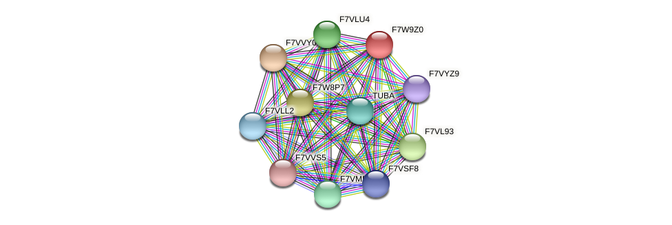 SMAC_08267 protein (Sordaria macrospora) - STRING interaction network