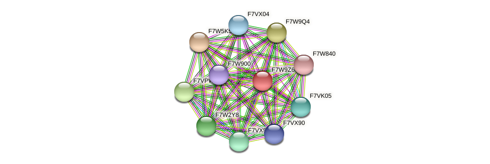 SMAC_08274 protein (Sordaria macrospora) - STRING interaction network