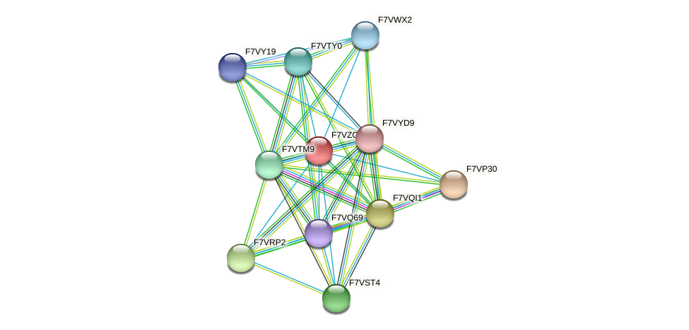 SMAC_08788 protein (Sordaria macrospora) - STRING interaction network