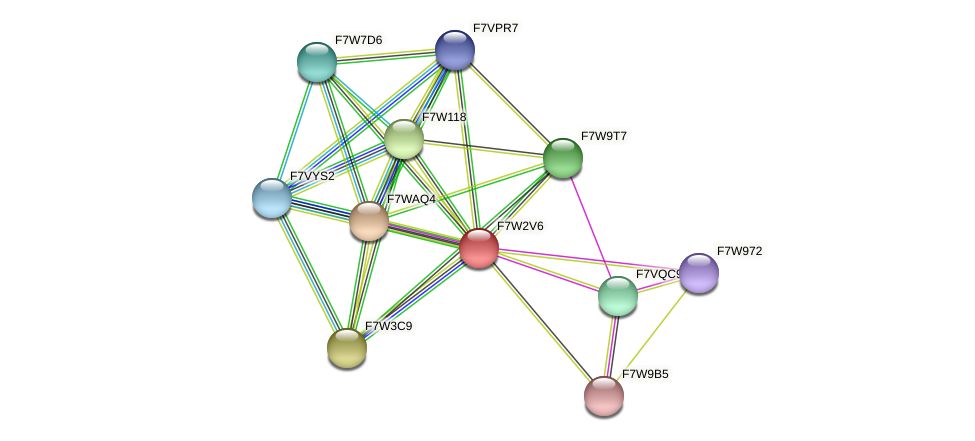 SMAC_08960 protein (Sordaria macrospora) - STRING interaction network