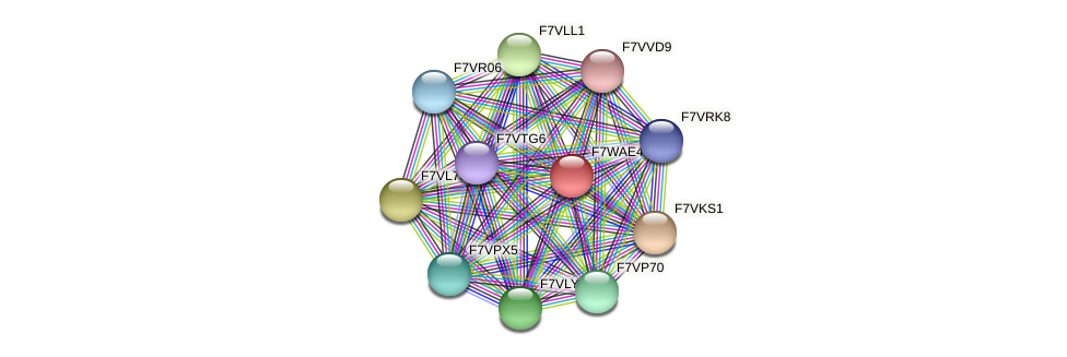 SMAC_08623 protein (Sordaria macrospora) - STRING interaction network