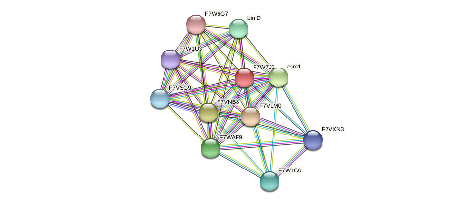 ycs5 protein (Sordaria macrospora) - STRING interaction network