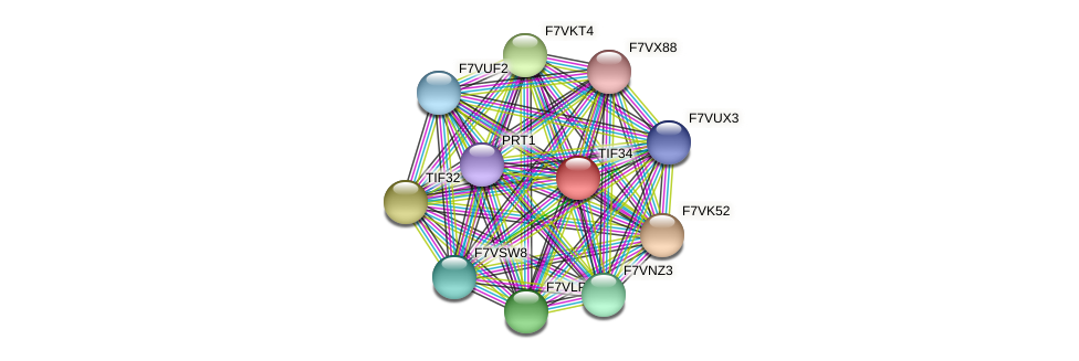 TIF34 protein (Sordaria macrospora) - STRING interaction network