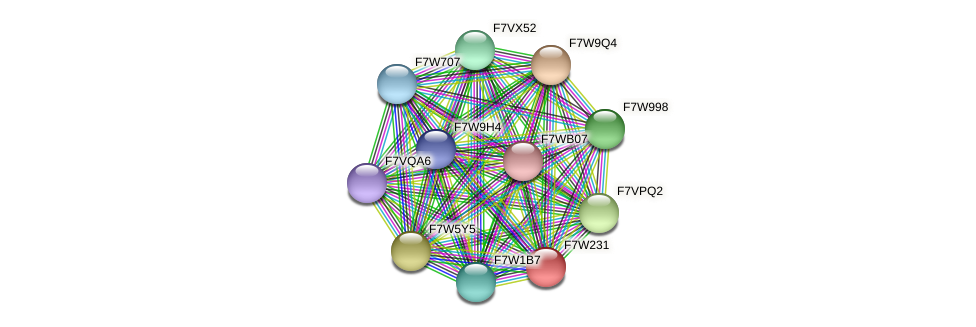 SMAC_04664 protein (Sordaria macrospora) - STRING interaction network