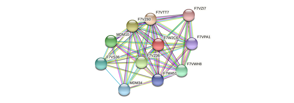 SMAC_04758 protein (Sordaria macrospora) - STRING interaction network