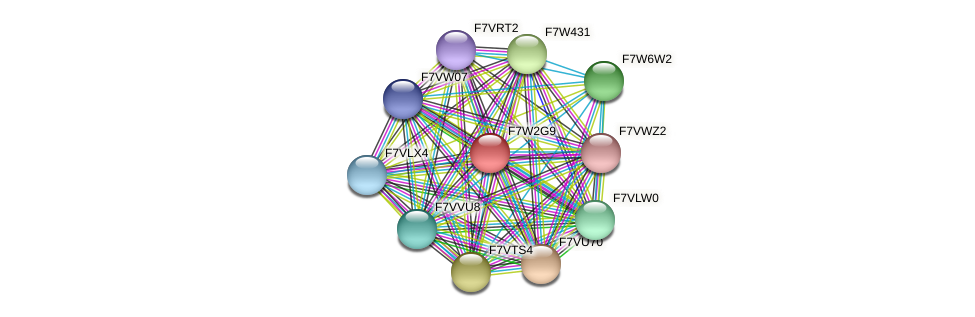 SMAC_04802 protein (Sordaria macrospora) - STRING interaction network