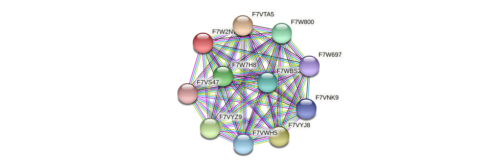 SMAC_05100 protein (Sordaria macrospora) - STRING interaction network