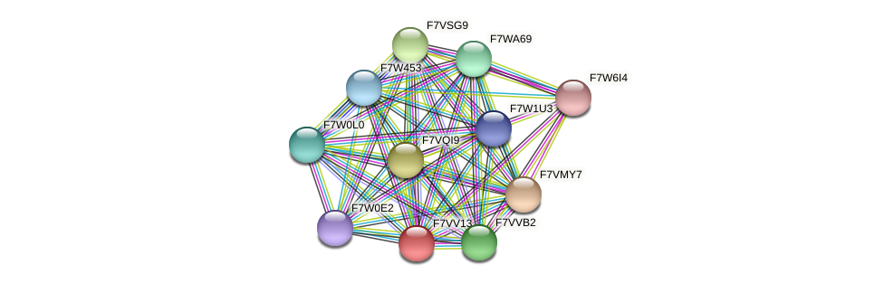 SMAC_05226 protein (Sordaria macrospora) - STRING interaction network