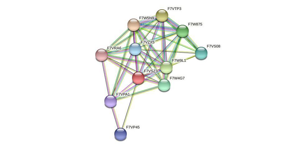 SMAC_05450 protein (Sordaria macrospora) - STRING interaction network