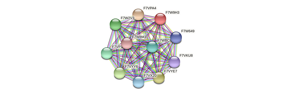 SMAC_08085 protein (Sordaria macrospora) - STRING interaction network