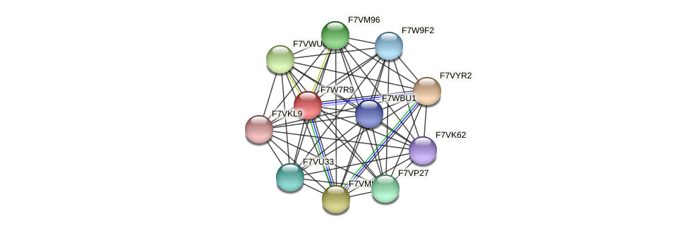 SMAC_07186 protein (Sordaria macrospora) - STRING interaction network