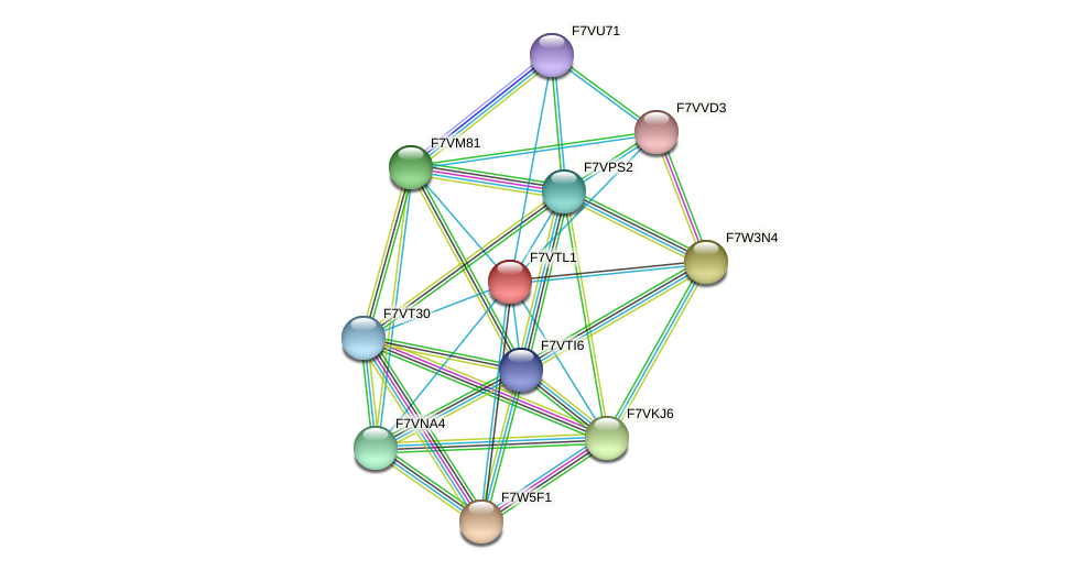 SMAC_08336 protein (Sordaria macrospora) - STRING interaction network