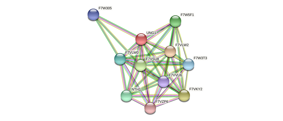 UNG1 protein (Sordaria macrospora) - STRING interaction network