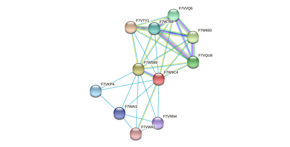 SMAC_08072 protein (Sordaria macrospora) - STRING interaction network