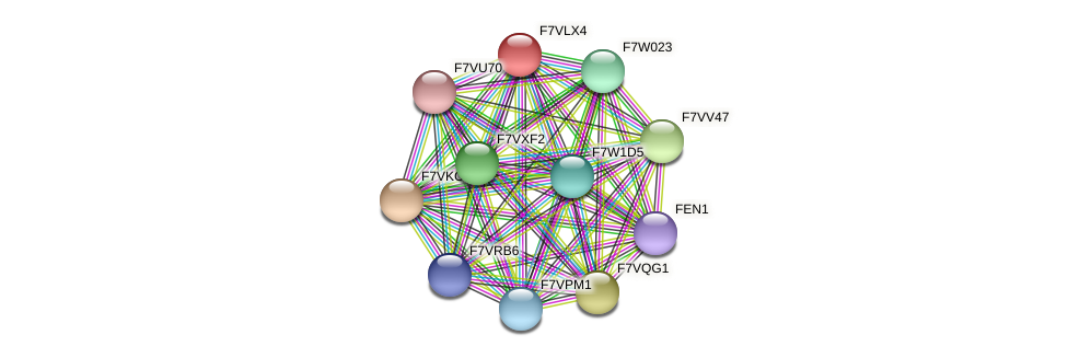 SMAC_04895 protein (Sordaria macrospora) - STRING interaction network