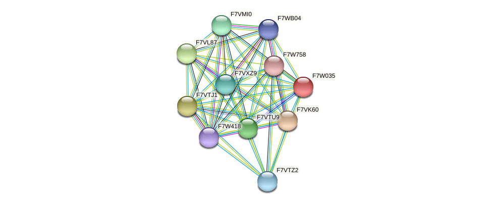 SMAC_03841 protein (Sordaria macrospora) - STRING interaction network