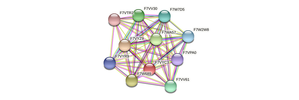 SMAC_06689 protein (Sordaria macrospora) - STRING interaction network